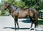 Veteran Horseman James Stone Dies