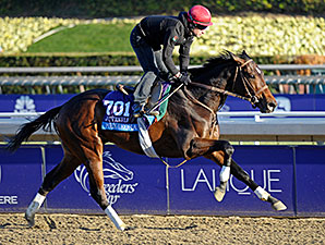 Mexikoma - 2013 Breeders' Cup, October 30, 2013.