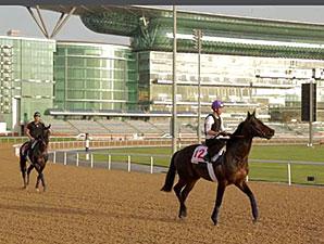 Dubai World Cup Horses Training March 21