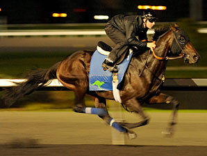 Miami Deco at Woodbine on October 14, 2011.