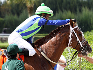 Mico Margarita wins the 2013 Carry Back Stakes.
