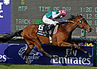 English Champion Midday Retired