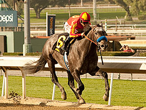 Sham Stakes: Midnight Hawk Soars Over Kristo