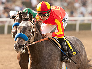Midnight Hawk wins the 2014 Sham Stakes.