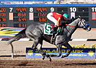 Midnight Lucky Looks Mighty in Sunland Oaks
