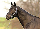 Midnight Lute to Stand for $25,000 in 2014