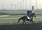 Dubai Carnival: Trainer Mike de Kock