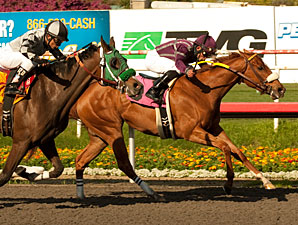 Miles Rules wins the 2011 Melair Stakes.