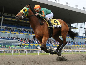Queen's Plate: Filly Milwaukee Appeal Favored