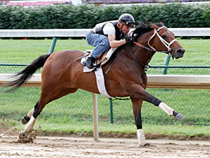 Mine That Bird Zips in Churchill Workout