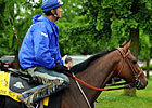 Sunny Day, Horses Ready for Belmont