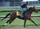 Mine That Bird Jogs, Rachel Alexandra Walks