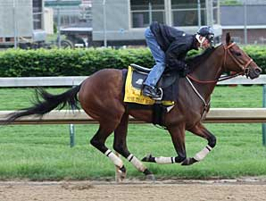Mine That Bird works at Churchill Downs on May 11