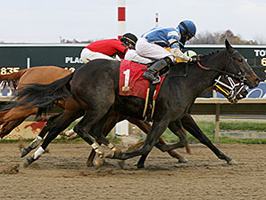 Miss Bullistic wins the Donna Freyer Stakes.