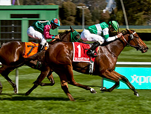Miss Machiavelli wins the 2013 Pike Place Dancer Stakes.