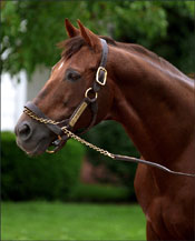 Miswaki, Sired 97 Stakes Winners, Dead