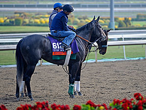 Mizdirection -  2013 Breeders' Cup October 29, 2013