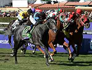Mizdirection Repeats in BC Turf Sprint