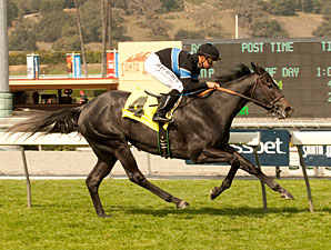 Mizdirection wins the 2012 Clocker's Corner.