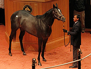 Mizdirection, hip 104, at the Fasig-Tipton November Sale.