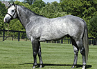 Mizzen Mast to Stand for $12,500 at Juddmonte