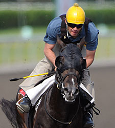 Mobilizer Getting Attention in Queen's Plate