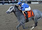 Mohaymen Shines in Nashua Stakes