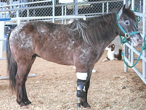 Three-Legged Horse an Inspiration to Many