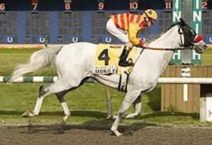Champion Monashee Retired