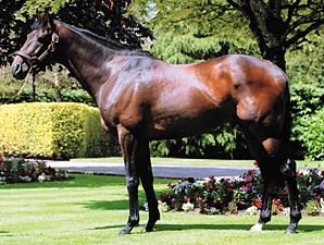 Coolmore Stallion Montjeu Dies at 16