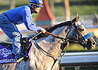 Trainer: Monzante Euthanized Due to Injuries