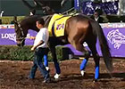 BC 2014: Moreno Checks Out Santa Anita