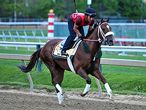Mr. Z - Pimlico, May 15, 2015.