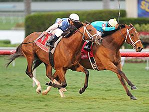Mr. Online wins the 2013 El Prado Stakes.