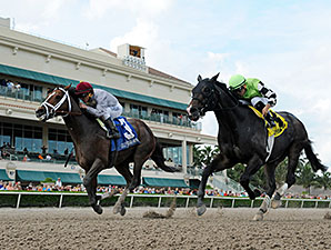 Mshawish Gets His Dirt Win in Hal's Hope