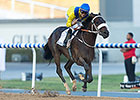Mubtaahij the X Factor in Kentucky Derby