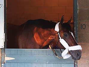 Mucho Macho Man Arrives for Big 'Cap Date