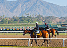 Slideshow: 2013 Breeders' Cup Week