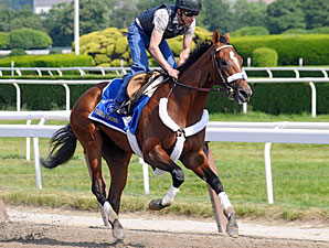 Mucho Macho Man to Make Return at Aqueduct