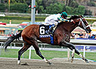 Mucho Macho Man Taking it Easy at Gulfstream