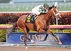Mucho Macho Man to Begin Year in 'Millions'