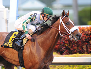Mucho Macho Man Preps for Gulfstream Handicap