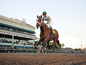 Mucho Macho Man wins the 2014 Sunshine Millions Classic.