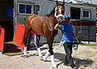 Mucho Macho Man Returns to Gulfstream Park