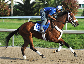 Mucho Macho Man gallops at Fair Groundso on March 24, 2011.