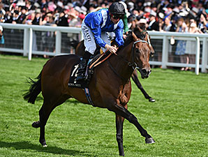 Muhaarar wins the 2015 Commonwealth Cup.