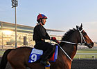 Watch Dubai Races Live on BloodHorse.com