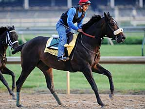 Musket Man gallops at Churchill Downs on April 29