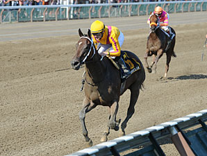 My Miss Aurelia Profile News Entries Results Video And Blogs Bloodhorse Com