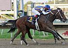 Featured Horse Profile: My Miss Aurelia